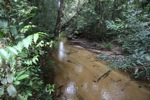 Sand-bottom creek that formers the border of Gunung Palung [kalbar_0071]