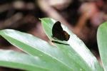 Butterfly [kalbar_0667]