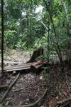 Illegal cut timber [kalbar_0158]