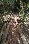Illegal cut boards in the Gunung Palung rainforest