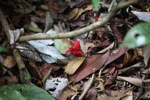 Red flower emerging from the rainforest floor