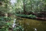 Clear rainforest creek [kalbar_0251]