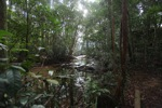 Rain forest creek in Gunung Palung