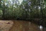 Clear jungle creek