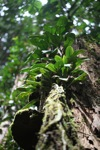 Epiphytes growing on a tree stump