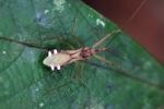 Assassin bug [kalbar_0364]