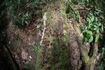 Fungi on a rotting log [kalbar_0404]