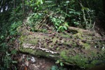 Fungi on a rotting log [kalbar_0406]