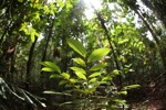 Rainforest in Indonesia Borneo