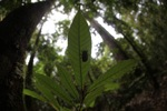 Cicada moult [kalbar_2074]