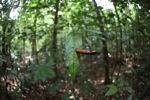 Borneo rainforest [kalbar_0873]