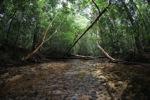 Rain forest stream in Gunung Palung, Indonesian Borneo [kalbar_0444]