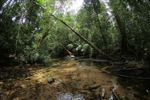 Rainforest creek at Cabang Panti