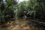 Rain forest creek at Cabang Panti