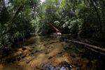 Jungle creek at Cabang Panti [kalbar_0466]