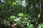 Rainforest understory [kalbar_1481]