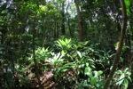 Rain forest understory