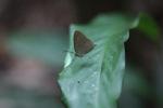 Butterfly [kalbar_1360]