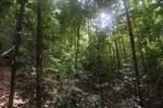 Rainforest in Indonesian Borneo [kalbar_0727]