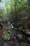 Rainforest creek in Borneo