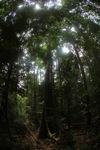 Rainforest in Indonesian Borneo [kalbar_0841]