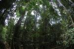 Rainforest in Indonesian Borneo [kalbar_0842]