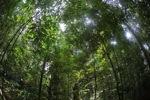 Rainforest in Indonesian Borneo [kalbar_0850]