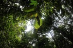 Borneo rainforest [kalbar_0432]