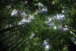 Borneo rainforest [kalbar_0878]