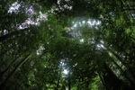 Borneo rainforest [kalbar_0879]