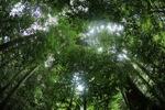 Borneo rainforest [kalbar_0880]