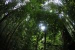 Borneo rainforest [kalbar_0882]