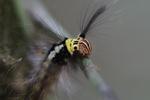 Maroon, yellow, black, and white caterpillar [kalbar_0913]