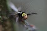 Red, yellow, black, and white caterpillar [kalbar_0921]