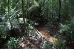 Rainforest in West Kalimantan [kalbar_1013]