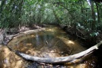 Rainforest stream in West Kalimantan