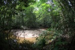 Rainforest stream in West Kalimantan [kalbar_1019]