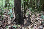 Termite nests in the rainforest