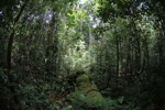Rainforest in West Kalimantan [kalbar_1024]