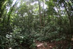 Rainforest in West Kalimantan [kalbar_1029]