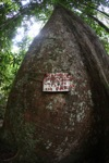 Tree spiked to discourage illegal logging