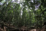 Rainforest in West Kalimantan [kalbar_1041]