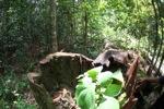Chopped down rainforest tree
