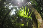 Sun rays catching a rainforest palm fron