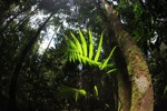 Sun rays catching a rainforest palm leaf