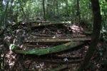 Sawn hardwood timber in Gunung Palung [kalbar_1051]