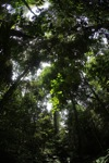 Rainforest in West Kalimantan [kalbar_1050]