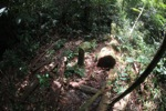 Sawn hardwood timber in Gunung Palung
