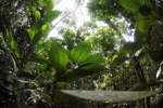 Rainforest in West Kalimantan [kalbar_1080]