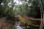 Rainforest creek in West Kalimantan [kalbar_1093]